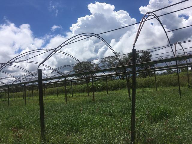Estufa agrícola 2 por 6.300R$ - Foto 2