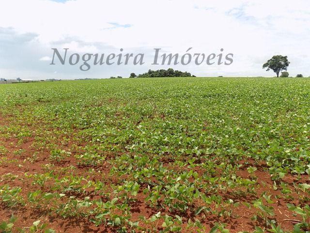 Sítio na região, área com 24 alqueires, terra vermelha (Nogueira Imóveis Rurais) - Foto 9