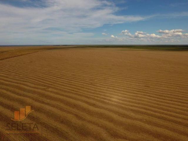 Fazenda à venda, 12650000 m² por r$ 16.000.000 - vila rica - barreiras/ba - Foto 4