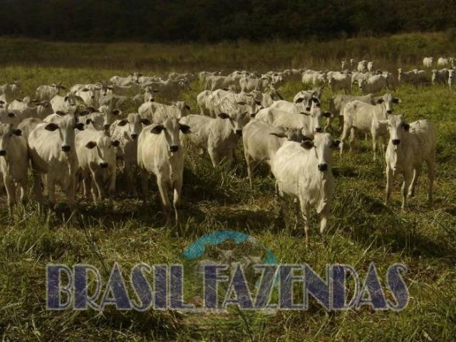 Fazenda em Barreiras. Oeste da Bahia - Foto 11
