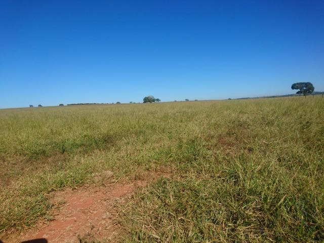 Fazenda Agrícola em Palminopolis-GO. 50 Alq. c/ 30 em Lavoura - Foto 14