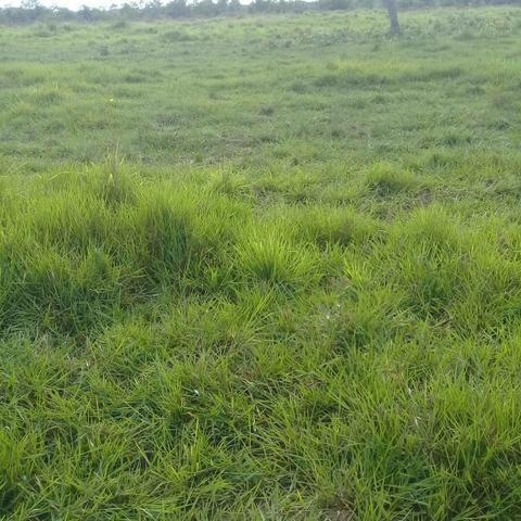Fazenda Boa de Terra em Cocalinho - MT - Foto 18