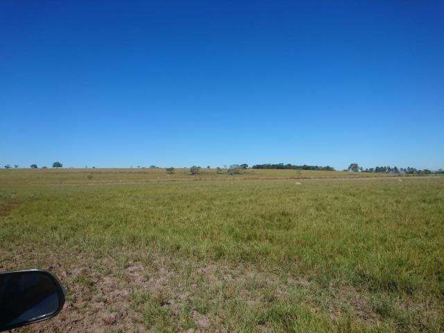 Fazenda Agrícola em Palminopolis-GO. 50 Alq. c/ 30 em Lavoura - Foto 4