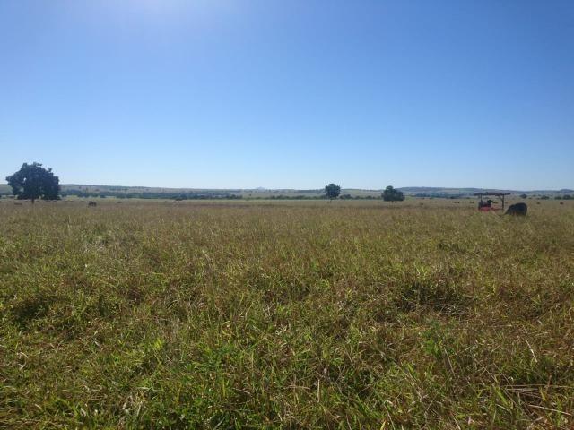 Fazenda Agrícola em Palminopolis-GO. 50 Alq. c/ 30 em Lavoura - Foto 10