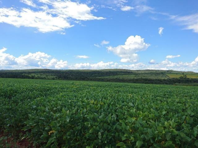 Fazenda 70 Alqueires em Cristianópolis-GO (Lavoura e Gado)