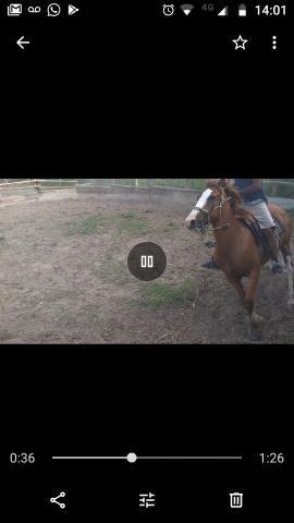 Cavalo marchador 3,500,00 - Foto 3