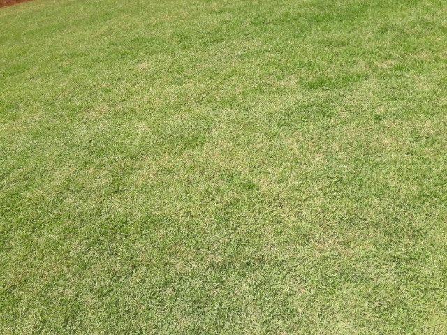 grama com qualidade - Foto 4