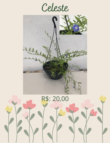 Plantas ornamentais  de preços variados  - Foto 4