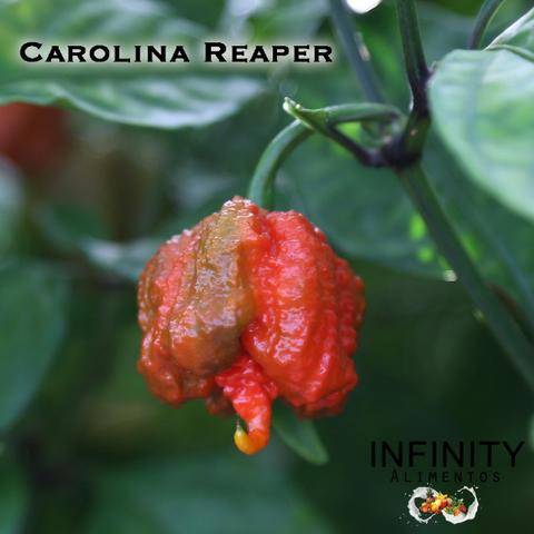 Carolina Reaper a pimenta mais ardida do mundo! - Foto 3