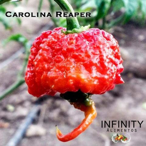 Carolina Reaper a pimenta mais ardida do mundo!