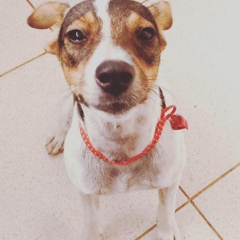 Cachorrinhos - Foto 3
