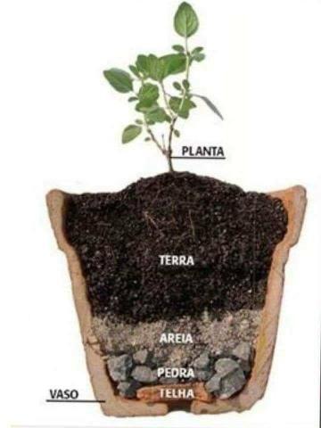 Jardinagem ferramentas- Aprenda a construir uma horta usando 1 m² do seu quintal - Foto 3