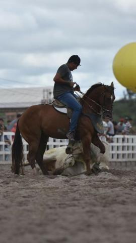 Cobertura (não estou vendendo o cavalo é apenas a cruza) - Foto 3