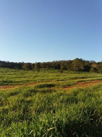 Fazenda c/ 508he c/ 330he Formados, 28km de Alto Araguaia-MT - Foto 2