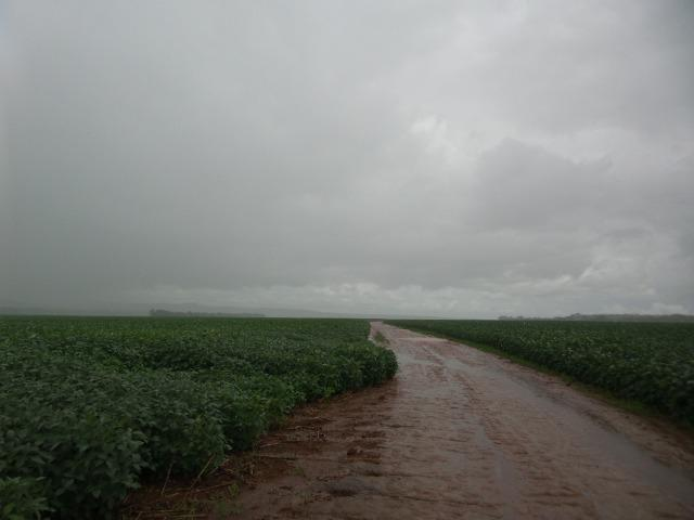 Fazenda 3.771 Hectares Plantando Lavoura - Canarana - MT - Foto 2