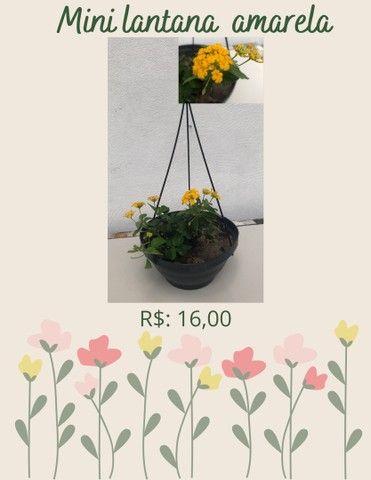 Plantas ornamentais  de preços variados  - Foto 5
