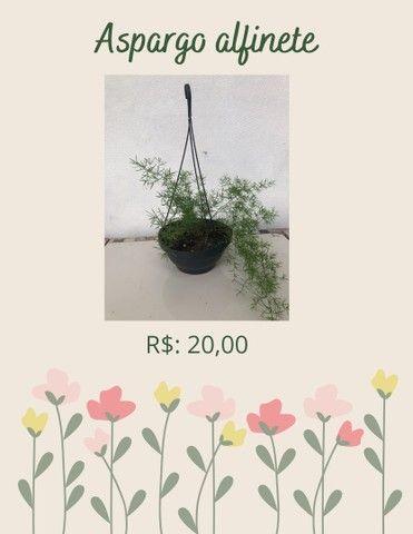 Plantas ornamentais  de preços variados  - Foto 6