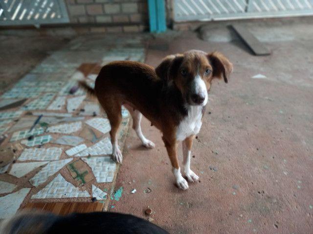 Doação de uma cadela - Foto 2