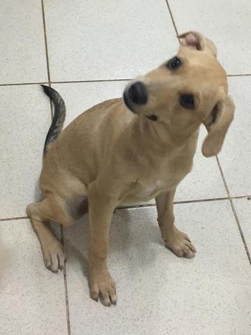 Cachorrinhos - Foto 5