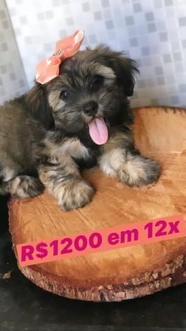 12x SEM JUROS! Promoção - Foto 2