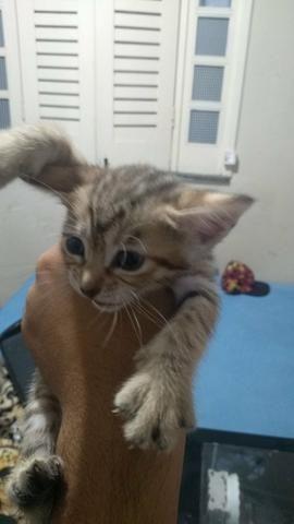 Doação gata femea mestiça - Foto 4