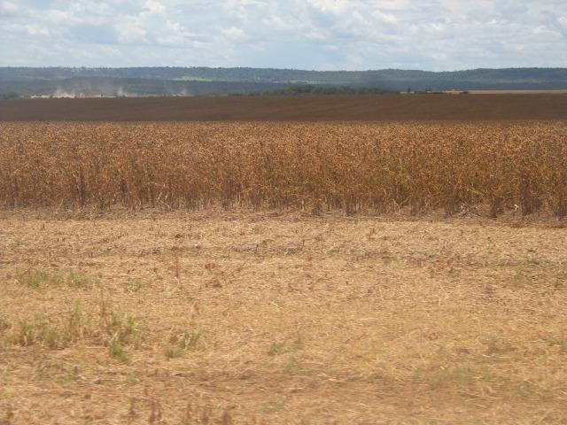 Fazenda 3.771 Hectares Plantando Lavoura - Canarana - MT - Foto 3