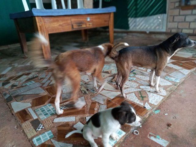 Doação de uma cadela - Foto 3