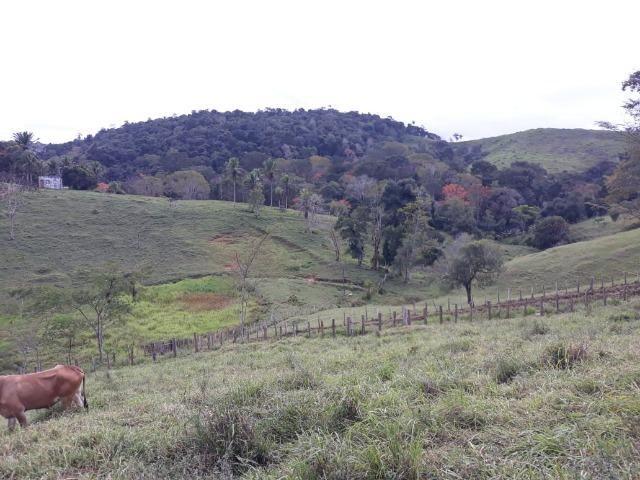 Fazenda de Pecuária - Foto 10