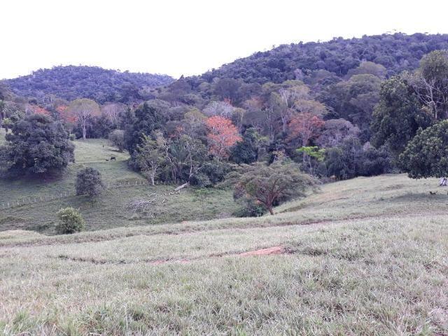 Fazenda de Pecuária - Foto 6