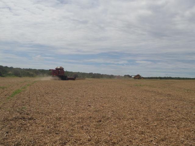 Fazenda 3.771 Hectares Plantando Lavoura - Canarana - MT - Foto 5