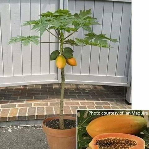 Jardinagem ferramentas- Aprenda a construir uma horta usando 1 m² do seu quintal - Foto 2