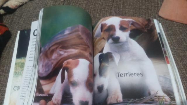 Almanaque raça de todos os cães - Foto 4