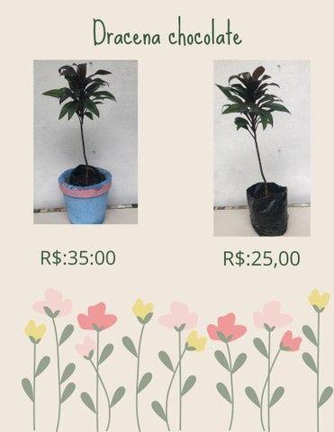 Plantas ornamentais  de preços variados  - Foto 2