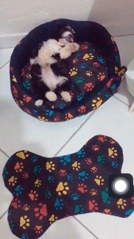 Kit pet - Foto 3