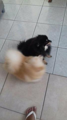 5417f032c9 Promoção pulgoff compre 2 leve 3 - Cachorros - Vila Ind