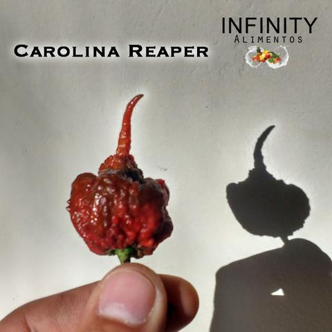 Carolina Reaper a pimenta mais ardida do mundo! - Foto 2