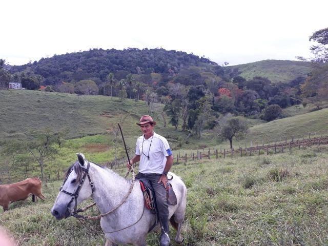 Fazenda de Pecuária - Foto 7