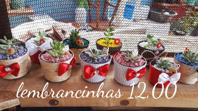 Suculentas e cactos  - Foto 6