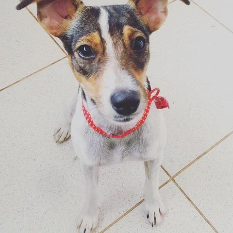 Cachorrinhos - Foto 2