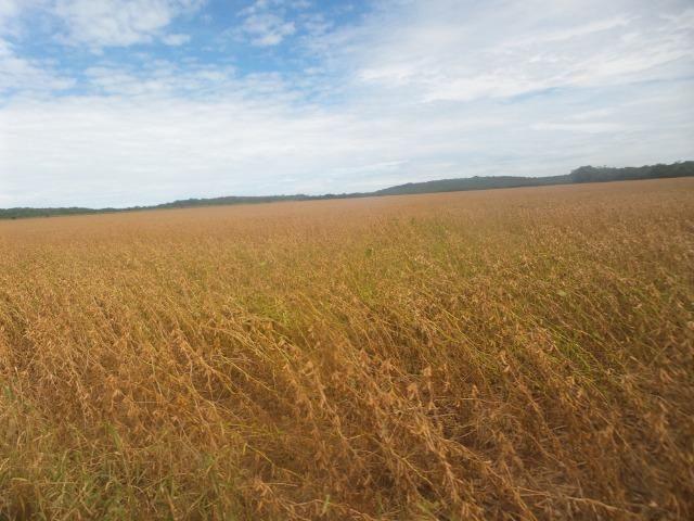 Fazenda 3.771 Hectares Plantando Lavoura - Canarana - MT - Foto 7