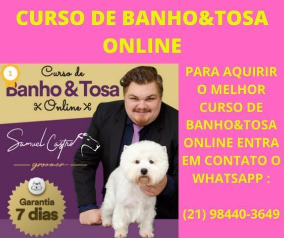 Curso Banho&Tosa Online