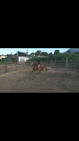 Cavalo marchador 3,500,00 - Foto 4
