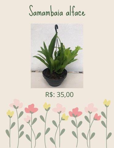 Plantas ornamentais  de preços variados