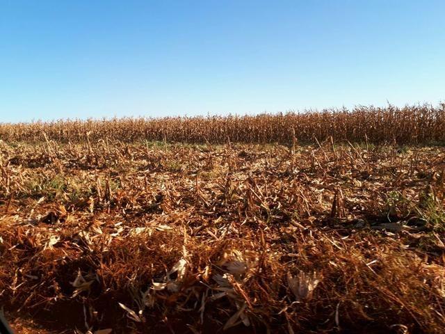 Fazenda. no Ms p Arrendamento de Lavouras 2650 há Show de Bola - Foto 4