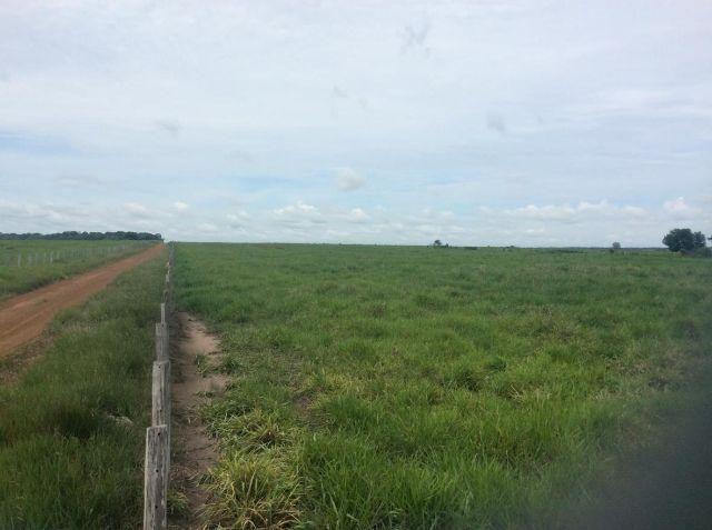 Fazenda em Brasnorte MT - Beleza de área com dupla aptidão