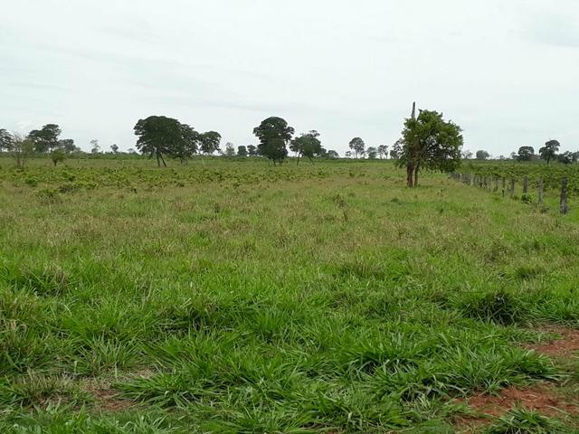 Fazenda. no Ms p Arrendamento de Lavouras 2650 há Show de Bola - Foto 10