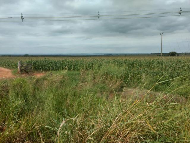Fazenda. no Ms p Arrendamento de Lavouras 2650 há Show de Bola - Foto 2