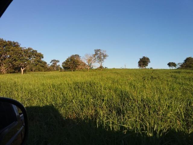 Fazenda c/ 508he c/ 330he Formados, 28km de Alto Araguaia-MT - Foto 12