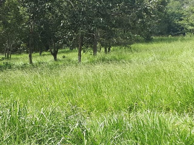 Fazenda c/ 508he c/ 330he Formados, 28km de Alto Araguaia-MT - Foto 14