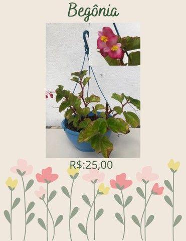 Plantas ornamentais  de preços variados  - Foto 3